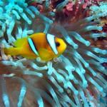 stiri_scuba-diving_scufundari_marea-rosie